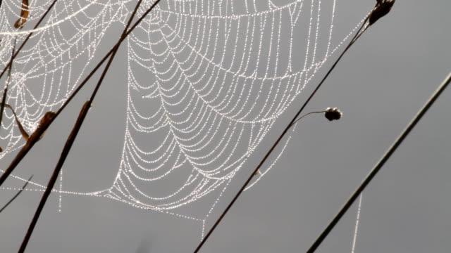 vídeos y material grabado en eventos de stock de rocío-spangled spider web de lavados por río de vídeo hd de luz reflejada - telaraña