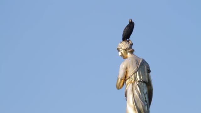 Cormorants Phalacrocorax carbo on Diana Fountain statue London HD video video