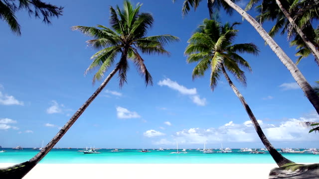 Two coconut palms on tropical beach video