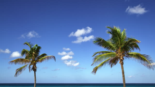 Two coconut trees swaying with beachfront