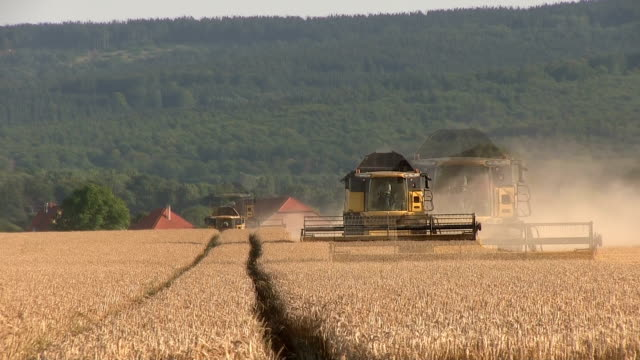 two combine harvesting wheat - gluten free stock videos and b-roll footage