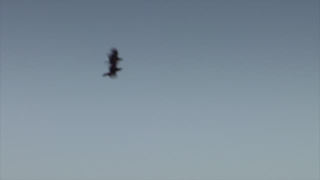 2 つのカラスは、空気中の儀式を実行します。 - 2匹点の映像素材/bロール