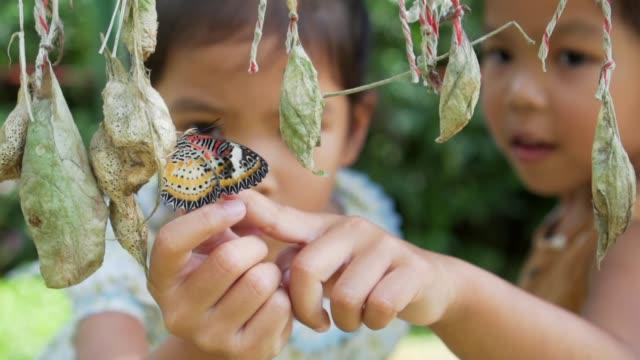 vidéos et rushes de deux mignonnes petites filles asiatiques essaient de toucher le papillon coloré, curieux et amusant dans le mouvement lent coup. - zoo