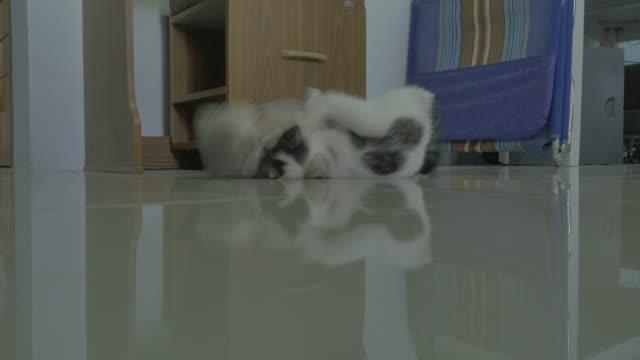 две кошки игра. (4k) симпатичный - кошка смешанной породы стоковые видео и кадры b-roll