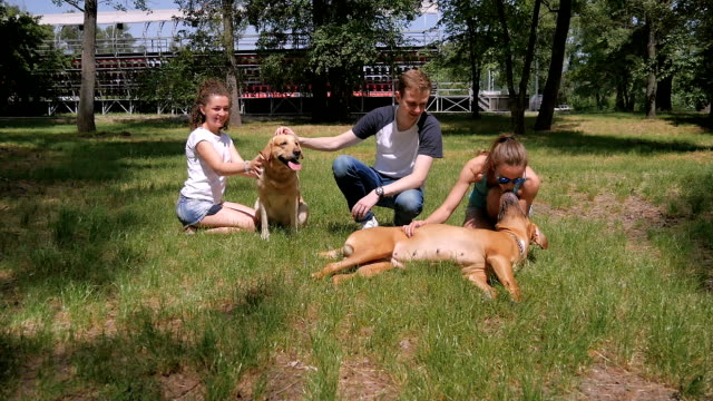 Two cute girls and young man touches dogs in park video