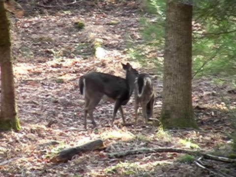 vídeos y material grabado en eventos de stock de dos deer  - parte del cuerpo animal
