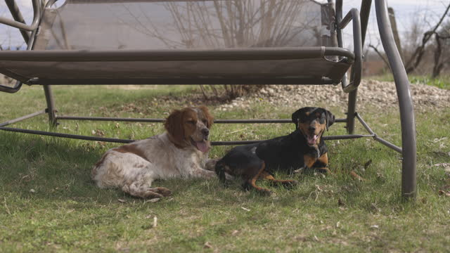 Two dogs lying beneath hanging chair in back yard