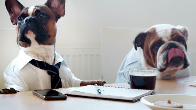 zwei hunde sitzen in einem büro, tagungsraum - konferenztisch stock-videos und b-roll-filmmaterial