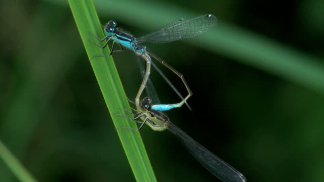 two dragonfly in nature two dragonfly sideways glance stock videos & royalty-free footage