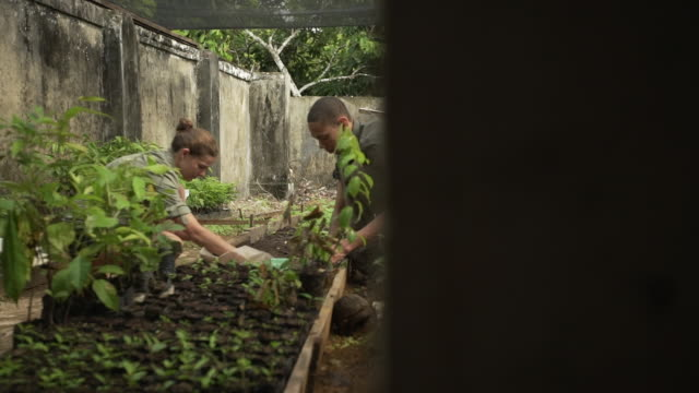 Two farm volunteers planting cacao tree saplings