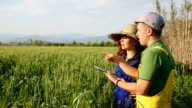 istock Two farmer standing in a field and looking at tablet 1176409017