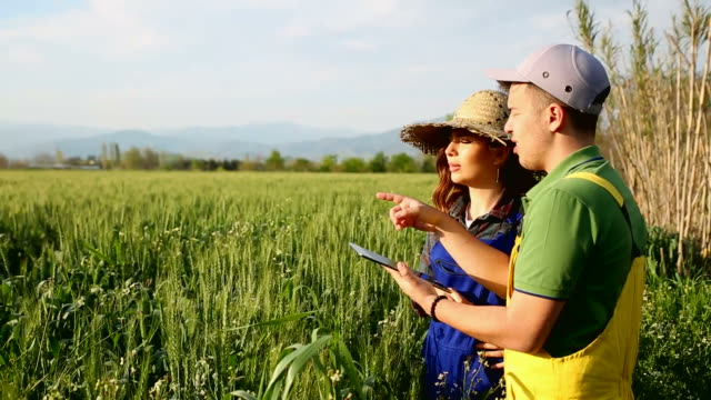 Two farmer standing in a field and looking at tablet