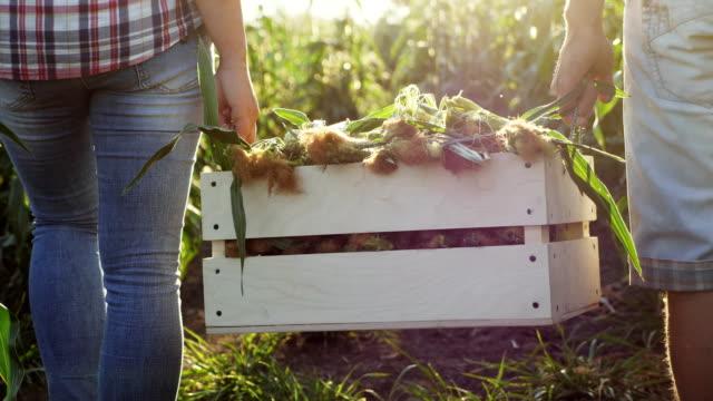 två bönder bära majs i en trälåda - bära bildbanksvideor och videomaterial från bakom kulisserna