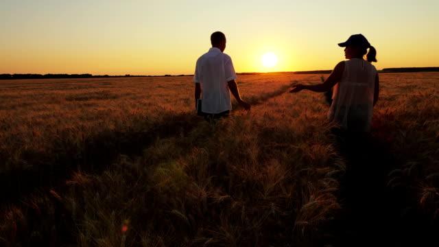 Two Farmers Walk Along a Wheat Field video