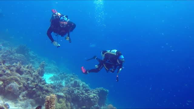 zwei weibliche unterwassertaucher - sporttauchen stock-videos und b-roll-filmmaterial