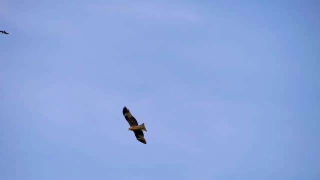 青空に飛ぶ二羽の鳥が翼を広げる - 鳥点の映像素材/bロール