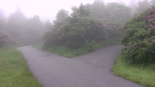 Two foggy roads HD A foggy scene where the road splits. fork stock videos & royalty-free footage