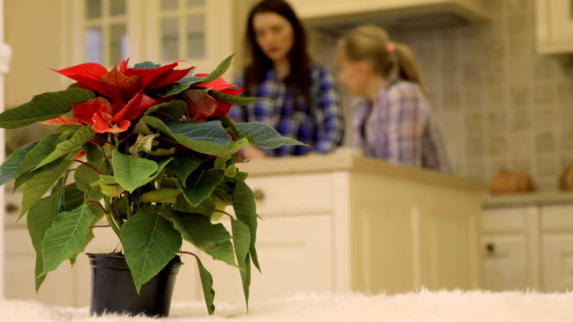 Two girlfriends talks at the kitchen at the background of christmas flower video