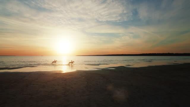 vídeos de stock, filmes e b-roll de duas garotas estão montando cavalos em uma praia. corrida de cavalos na água. muito lindo pôr do sol é visto nesta foto aérea. - cavalgar