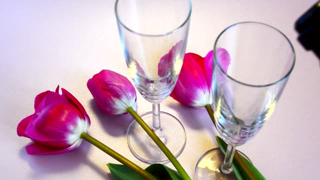 Two glasses of sparkling wine and red tulips. Pour wine into glasses