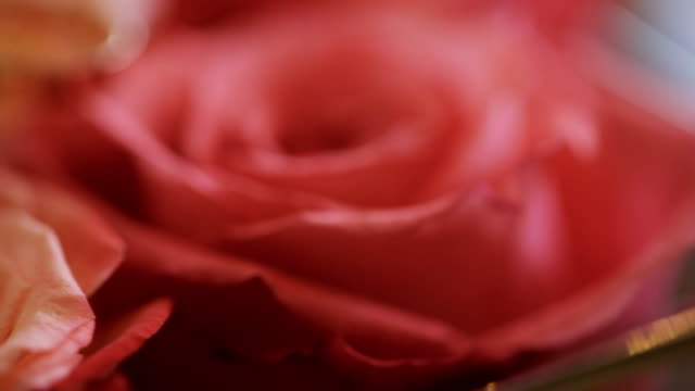 Two gold bridal rings lie on bouquet of red roses video