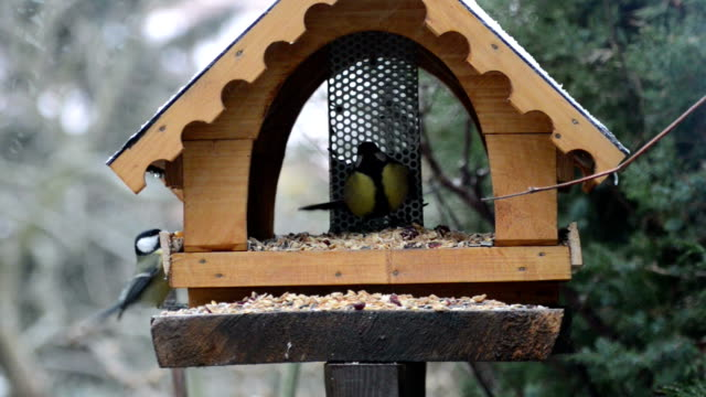 two great tits on bird feeder in winter time.
