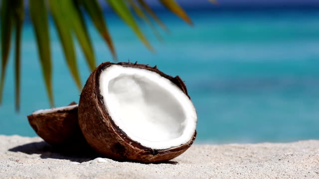 Two halfs of cracked brown coconut on white sandy beach with palms leaf and turquoise sea background