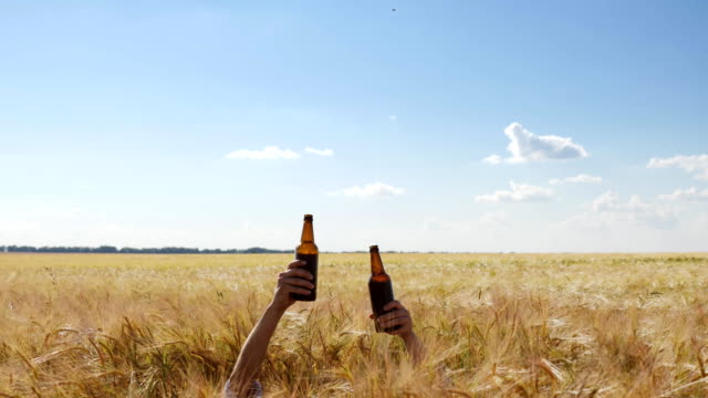 two hands of people with bottles of beer in the middle of the barley field - orzo video stock e b–roll