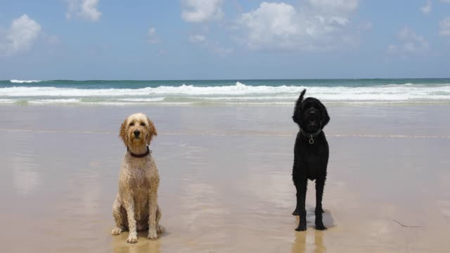 Two Happy Dogs Playing On Pet Friendly Beach