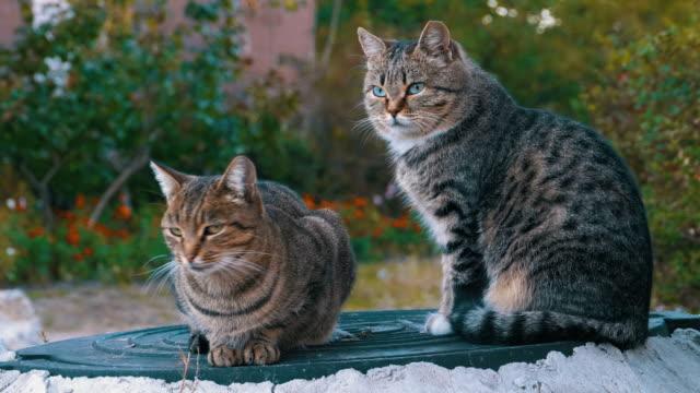 2 つの灰色の野良猫が路上で座っています。 - 2匹点の映像素材/bロール