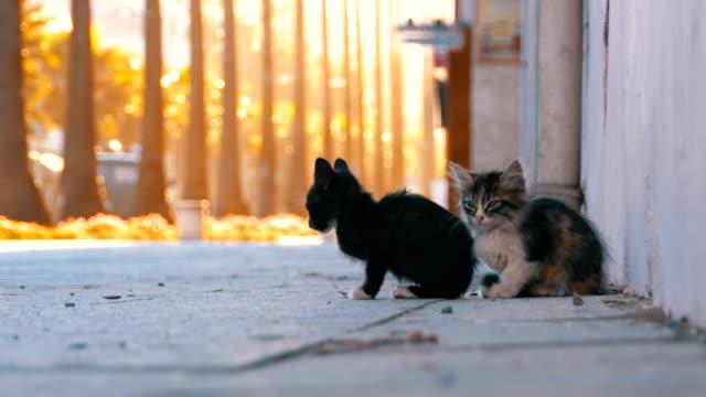 都市の路上ホームレス 2 匹の子猫 - 打ち捨てられた点の映像素材/bロール