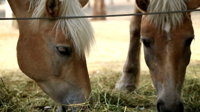 Two horses eating hay Two horses eating hay corral stock videos & royalty-free footage