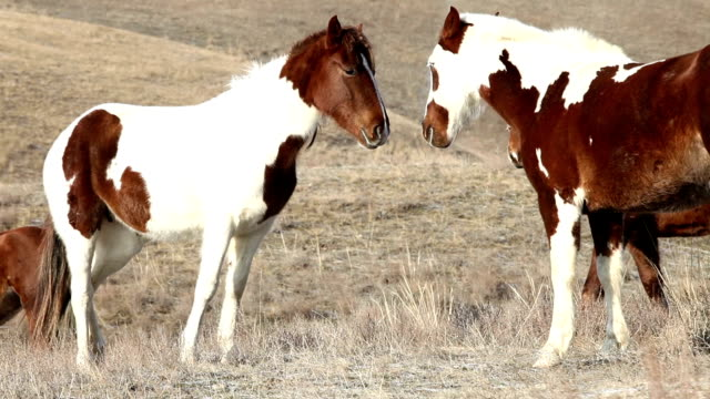 Two Horses on the red hills. video