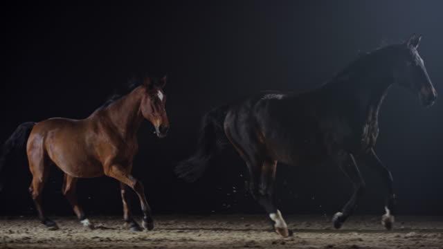 slo mo zwei pferde laufen nachts in einer n:0-reithalle - pferdeartige stock-videos und b-roll-filmmaterial