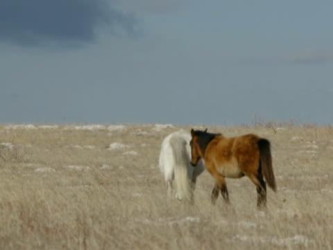zwei pferde  - pferdeartige stock-videos und b-roll-filmmaterial