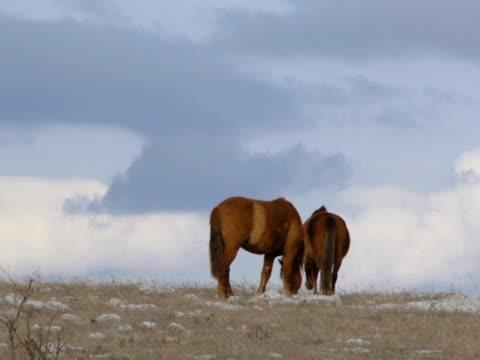 dwa konie  - część ciała zwierzęcia filmów i materiałów b-roll