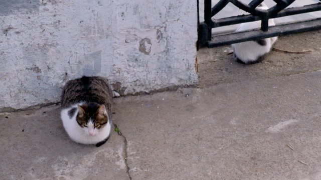 vídeos de stock e filmes b-roll de two hungry cats are waiting for fishermen's catch - lata comida gato