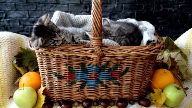 ウィッカーバスケットの中の2匹の子猫 - 籠点の映像素材/bロール