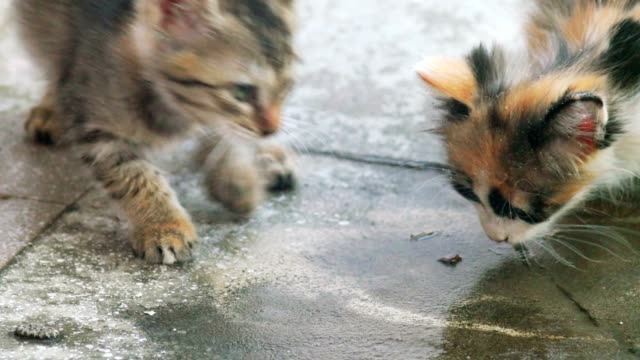 Two kittens is lapping water on concrete floor video