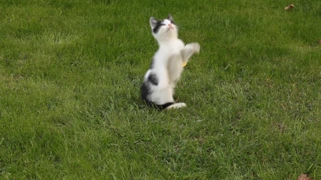 2 匹の子猫が芝生で遊んで ビデオ