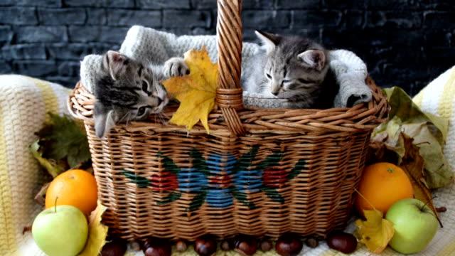 ウィッカーバスケットの中で葉で遊ぶ2匹の子猫 - 籠点の映像素材/bロール