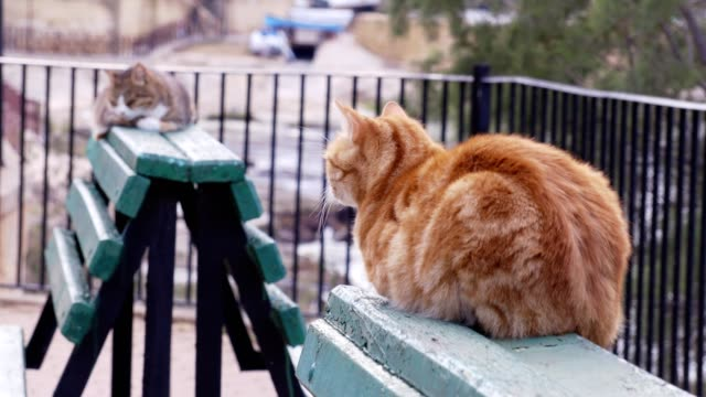 two  lazy  cats squatting on green benches - baffo parte del corpo animale video stock e b–roll