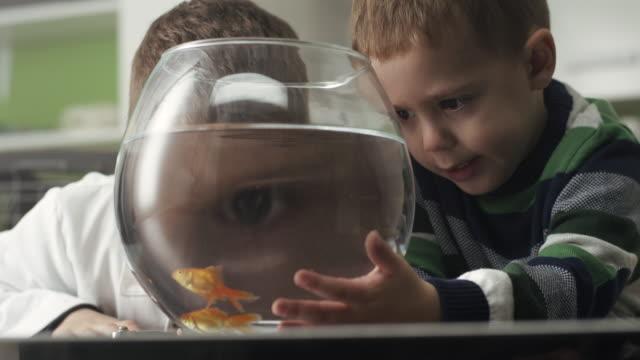 due ragazzini con pesci rossi - curiosità video stock e b–roll