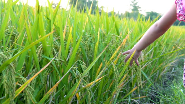 Two little girl hand touch green grass in rice field. rural and natural scenery