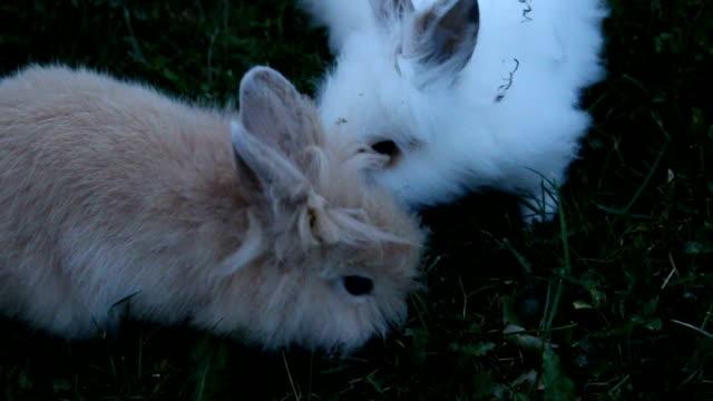 i̇ki küçük tavşan açık - kabarık stok videoları ve detay görüntü çekimi