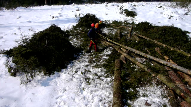 AERIAL: two loggers working in the forest video