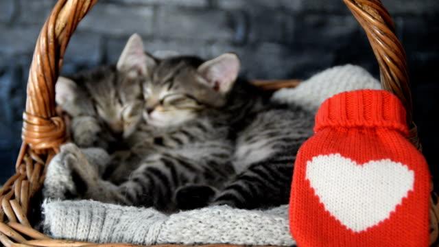 ウィッカーバスケットで眠っている2匹の素敵な子猫 - 籠点の映像素材/bロール