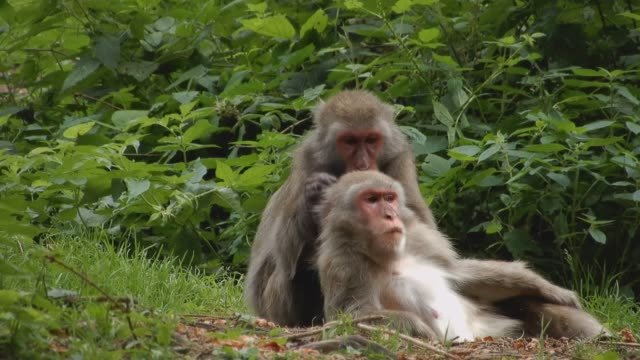 vücut bakımı içinde ekilmemiş boş arazi içinde iki uçtan - makak maymunu stok videoları ve detay görüntü çekimi