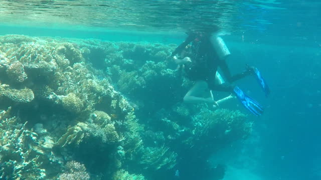 Two Men diving in coral reef Red sea Two Men diving in coral reef Red sea. Underwater scene diving to the ground stock videos & royalty-free footage