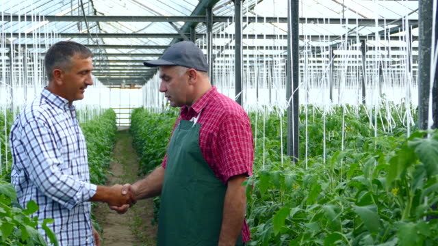 4K Two men making agreement in greenhouse video